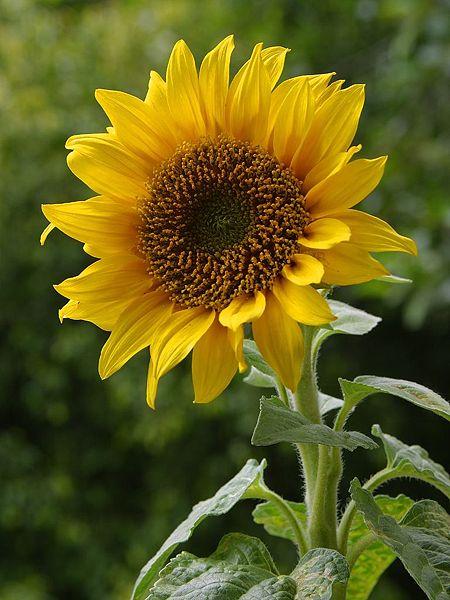 Best florist sources at on line flowers com